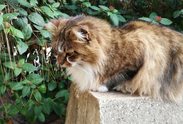 AUB cats